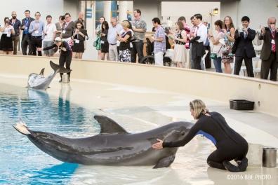 bbe-photo-dolphin-exhibit-mirage0001